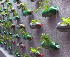 If you are thinking of a nice, sustainable way of recycling plastic bottles, you could get your inspiration from this big vertical garden made using recycled soda bottles. Created as… Reuse Plastic Bottles, Recycled Bottles, Plastic Containers, Plastic Planters, Plastic Recycling, Water Bottle Recycling, Plastic Terrarium, Pet Recycling, Plastic Jugs