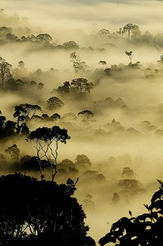 A morning View Typical Rain Forest view from Borneo.. A early morning shot during the Sunrise. I took this shot from a small uphill in Danum Valley.As the Sun was arising,the Mist has started filling the tall trees.It looked a different world.