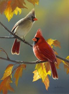 pretty birds Custom Decor Cardinal Polyester 34 x House Flag Size: H x W Pretty Birds, Love Birds, Beautiful Birds, Animals Beautiful, Birds 2, Glass Birds, Small Birds, Flying Birds, Exotic Birds
