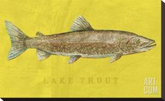 Lake Trout Stretched Canvas Print by John Golden at Art.com
