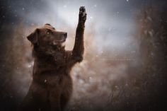 Hello Winter :) - stock photo