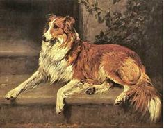 Collie by John Emms