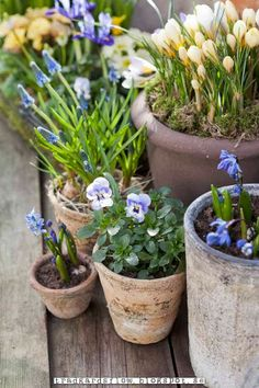 like the different sizes of pots with shades of pale blue and yellow
