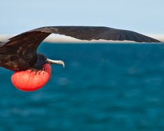 """""""Level Frigate"""" Galapagos Islands#World heritage"""