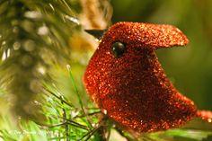 """Red Bird"""