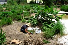 While volunteering atCold Water Gardensin Milton, Florida, I helped tobuild a banana circle–which is basically a circular swale/mulch pit surrounded by banana plants. *The circle is multi-…