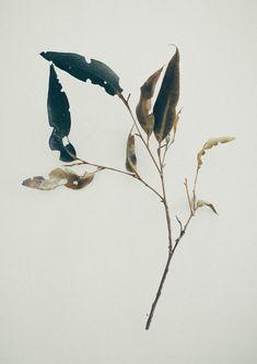 Jared Fowler's bleak photography - Bleaq Botanical Drawings, Botanical Prints, Landscape Photography, Art Photography, Tatoo Henna, Arte Floral, Grafik Design, Oeuvre D'art, Flower Art