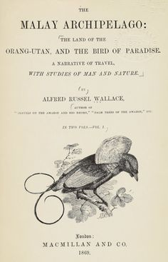 malay-archipelago-alfred-russel-wallace  Nineteenth-century explorer Alfred Russel Wallace was among the first to study birds of paradise in the wild.