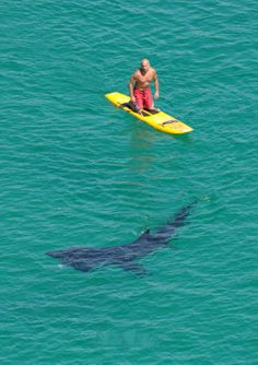 surfing with sharks! I really want to surf with a shark or a dolphin but I love them both! OMG I know I cray cray!
