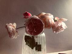 Tea Roses, Vase, Living Room, Home Decor, Decoration Home, Room Decor, Home Living Room, Drawing Room, Vases