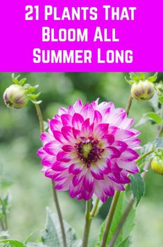 Enjoy these gorgeous blooms all summer long with these long-blooming plants. Growing Flowers, Growing Plants, Planting Flowers, Flower Gardening, Vegetable Gardening, Container Gardening, Outdoor Plants, Garden Plants, Outdoor Gardens