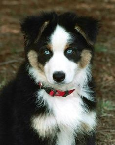 so pretty...I would love to have this dog!