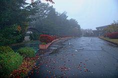 https://flic.kr/p/xui4fm | 아침 안개 : morning Fog 2 | 역시 진한 아침 물안개가 피는 가을 입구라는 것은 묘한 매력을 알려줍니다. 그래서 많은 분들이 가을 산행을 즐기는 것인지도 모르겠습니다.