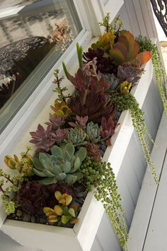 Succulent planter box from Simply Succulents