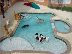 If I had a HUGE house I would want this Awesome Dog Pool plus a normal pool haha