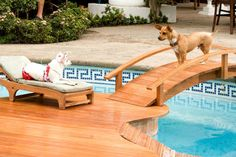 Beverly Hills Chihuahua - love the pool : )