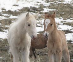 beautiful most wild horse   Wonderful images of Wild horses