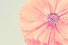 Pastel Orange Flower Flower Photography Nature by ApplesAndOats, via Etsy.