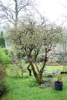 Lindas trädgårdsblogg: Spännande buskar och träd hos Håkan Wallin