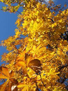 El otoño nos deja colores fabulosos!
