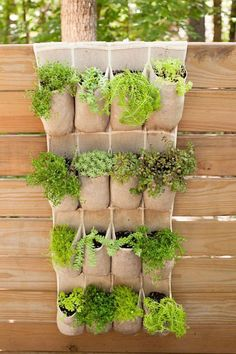 So clever: Clark hung an over-the-door shoe holder on the fence, tucking herbs into the compartments for a fun twist on the vertical planter. #herbsgardening