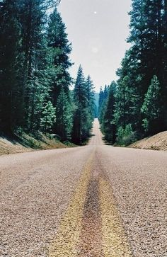 Dream Road | Road | Road Trip | Road Photo | Landscape photography | scenic | trees | forest | Drive | travel | wanderlust | on the road | empty road | Schomp BMW`