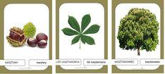 Montessori, Autumn Activities For Kids, Autumn Art, School, Autumn, Leaves, Kids