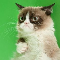 """""""And I said NO, NADA, NEVER, NOPE to that request,"""" said Grumpy Cat.                                                                                                                                                                                 More"""