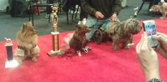 Group shot of some of the winners from Love that Dog Hollywood Annual Event ~ Cuties and Bruties Contest 2012