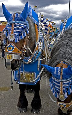 Similar in concept to our Budweiser Clydesdales, these are for a royal brewery in Germany called Hofbräu