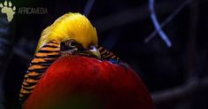 What is your favorite bird? Colorful Birds, Wildlife, Africa, Nature, Animals, Instagram, Naturaleza, Animales, Colourful Birds