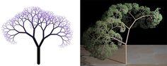 fractal plants