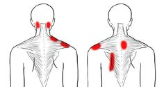A stiff neck and tight shoulders are very well known issues for many of us. The good thing is that if this pain is caused by stress, bad sitting habits, or lack o… Neck And Shoulder Exercises, Back Pain Exercises, Shoulder Workout, Neck Stretches, Fitness Exercises, Tight Neck, Tight Shoulders, Shoulder Pain Relief, Neck And Shoulder Pain