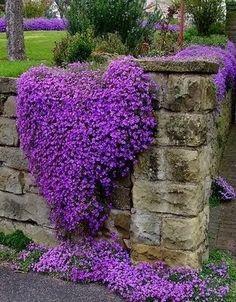 Ah... as flores, mais uma vez um caleidoscópio para você se inspirar...  Você consegue imaginar o altar do seu casamento neste jardim? É pos...