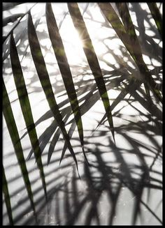 Sunlight Poster in the group Posters & Prints / Sizes / 50x70cm   19,7x27,6