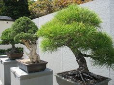 outside the Bonsai Garden | Flickr - Photo Sharing!