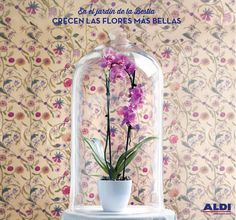 En nuestras tiendas, diferentes tipos de orquídeas...