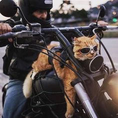 glorious ginger cat riding a harley davidson