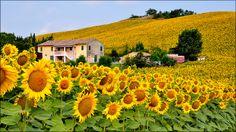 La Casa Fra i Girasoli by Luigi Alesi Sunflower House, Sunflower Fields, Summer Shots, Hd Wallpapers For Pc, Field Wallpaper, Sunflower Pictures, Colors And Emotions, Sunflower Wallpaper, Natural Scenery