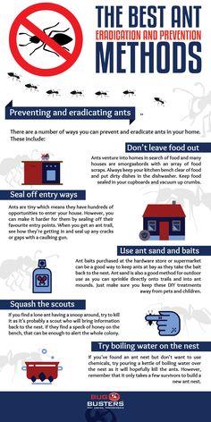 bugbusters.com.au - best ant eradication methods