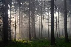 clearing in forest - Google Search
