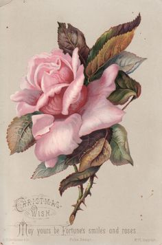 Antique Victorian Scrap Picture Card Christmas LG Pink Rose | eBay