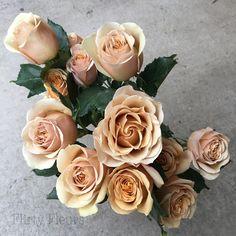 Golden Mustard Garden Roses grown by Alexandra Roses, Photographed by Flirty Fleurs Blush Flowers, Wedding Flowers, White Flowers, Beautiful Gardens, Beautiful Flowers, Mustard Flowers, Dubai Miracle Garden, Magic Garden, Rose Varieties