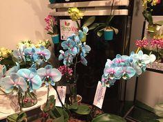 Orquídeas do Frozen ❄️💙 let go