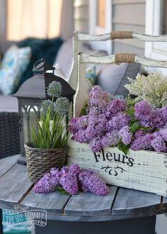 flowers.quenalbertini: Beautiful lilacs
