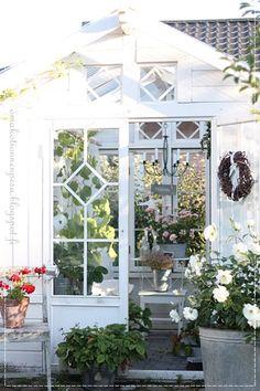 jaloruusu, pelargonia, kesähuone, kasvihuone, greenhouse, diy, vanhat ikkunat, mårbacka, oma koti onnenpesä