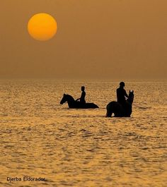 "jakupwashere: "" i-love-tunisia: "" Djerba Island, Tunisia. Horse Water, Shadow Silhouette, Dont Call Me, Amazing Sunsets, Beautiful Sunrise, North Africa, Beautiful World, Equestrian, Riding Horses"