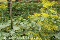 Garden Pests, Medicinal Plants, Pest Control, Organic Gardening, Herbs, Herb, Healing Herbs, Spice