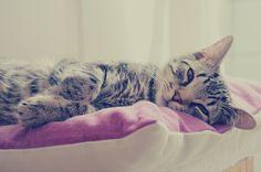 sleepy beauty