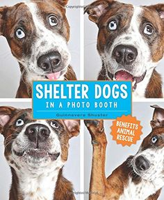 Shelter Dogs in a Photo Booth -- To view further for this item, visit the image link.